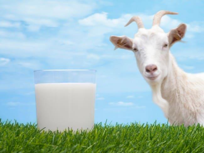 КОМПРЕССИОННОЕ БЕЛЬЕ что нужно чтобы продавать козье молоко вариантом использования термобелья
